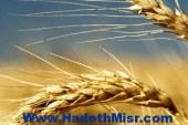 روسيا تصدر أكثر من مليون طن من الحبوب فى يناير الماضى