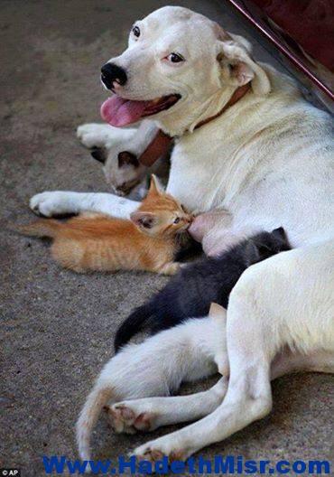 الامومة عند الكلاب