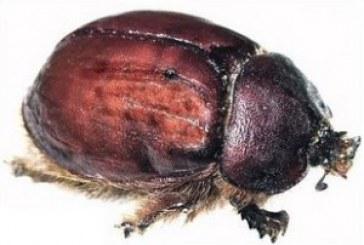 هام وخطير : أنت تأكل الحشرات دون قصد … هل تعرف كيف ؟؟!!!
