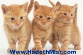 تحديد وجبات الطعام للقطط أفضل الطرق للحفاظ على صحتهم