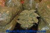 ضبط عاطل بالمنيا وبحوزته 6 كيلو جرام من مخدر البانجو بقصد الإتجار