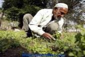 الزراعة : 5٫6 مليون طن أسمدة يحتاجها موسم الصيف
