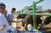 الوفد الايطالي يشيد بمصر الخير في مجال التلقيح الصناعي للثروة الحيوانية