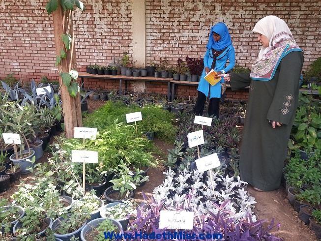 جامعة سوهاج تنظم أول معرض لأشجار ونباتات الزينة