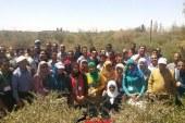 جامعة المنيا تعلن عن اعتزامها بدء الدورة التدريبية الثانية لزراعة شجيرات الجوجوبا