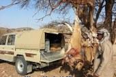 بكفالة 30 ألف جنيه …  نيابة جنوب البحر الأحمر تخلى سبيل سعوديين و كويتيين  لصيدهما حيوانات برية