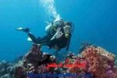 بحضور محافظ البحر الأحمر …  مؤتمر صحفى لمهرجان الغردقة الدولى لسياحة الغوص