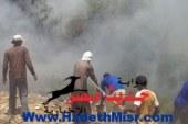 أهالى قرية تونس بالفيوم يسيطرون على حريق بمزارع الزيتون