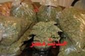 القبض على تاجرة  وبحوزتها 15 كيلو من نبات البانجو