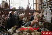 """"""" رغيف العيش """" أزمة حادة فى أسيوط"""