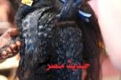 السرطان يهدد نساء مصر بسبب منتجات فرد الشعر