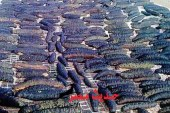 تغريم 5 صيادين 6 مليون جنيه لشروعهم فى صيد كمية من خيار البحر
