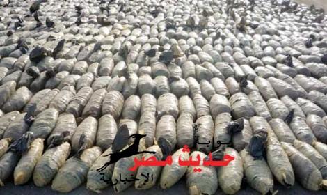 بدء التحقيق فى واقعة عثور قوات حرس الحدود على 2 طن و نصف بانجو بشواطئ سفاجا