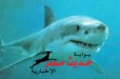 جهاز البيئة و محميات البحر الأحمر ينظمان غداً ورشة عمل عن طبيعة أسماك القرش