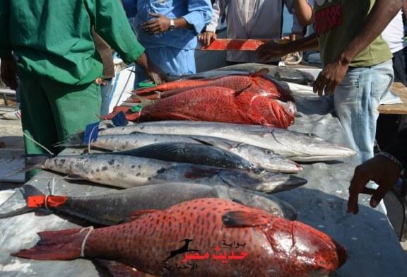 """بدءًا من الغد.. """"الزراعة"""" تطرح 27 طن سمك يوميًا بمنافذ التموين بأسعار مخفضة"""