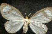 """الفراشات بدلا من المبيدات للقضاء على محاصيل الكوكايين بـ""""كولومبيا"""""""