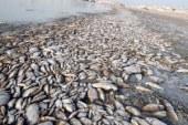 لجنة لبحث مشكلة نفوق الأسماك برشيد