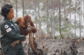 """صور جديدة لعمليات إنقاذ """"إنسان الغاب"""""""
