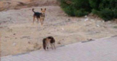 كلب يعقر 6 أشخاص بالدقهلية من بينهم أربعة أطفال..