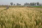 مصدر: التعديات على الأراضي الزراعية تتسبب في بوار 73 ألف فدان