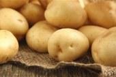 استقرار أسعار الخضراوات.. والبطاطس تسجل 3 جنيهات