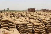 رقابة صارمة بالجمعيات الزراعية استعدادًا لاستلام القمح