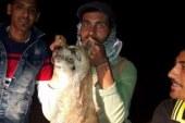 .أهالى قرية بالسويس يقتلون كلبة مسعورة عقرت 10 أطفال