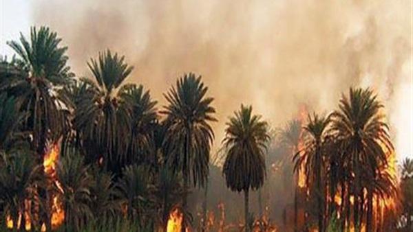 السيطرة على حريق أشجار النخيل بمحيط سنترال العتبة دون إصابات