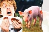 بيان لجنة التنسيق حول وضع انفلونزا الخنازير بمحافظة الدقهلية