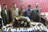 بالصور .. ضبط 5 متهمين بحوزتهم 30كيلو لمخدر البانجو بمركز كفر الشيخ