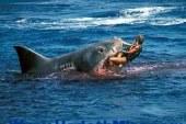 سمكة قرش تقتل سائحا نمساويا في شاطيء بجنوب إفريقيا