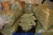 ضبط كميه من نبات البانجو المخدر بحوزة عاطل بالمنيا