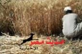 تموين سوهاج يبدأ في استقبال محصول القمح من الأهالي بسعر 420 جنيه للأردب