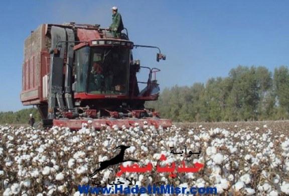 هل تصدق.. أن زراعة القطن السبب فى حروب أهلية بأمريكا