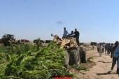 حملة أمنية لإزالة التعديات على 750 فدان من أراضي جامعة البحر الأحمر