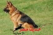 ضبط عاطل قام بسرقة كلب من فيلا رجل أعمال بالغردقة
