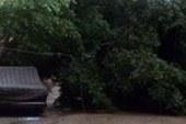 الحماية المدنية: إزالة آثار شجرة سقطت بمنطقة العجوزة بدون إصابات  …