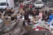 النائب محمد فؤاد: لا توجد إرادة سياسية حقيقية لحل مشكلة القمامة..